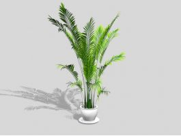 Chamaedorea Palm HousePlant 3d preview