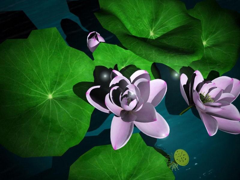 Lotus Flower Plant 3d rendering