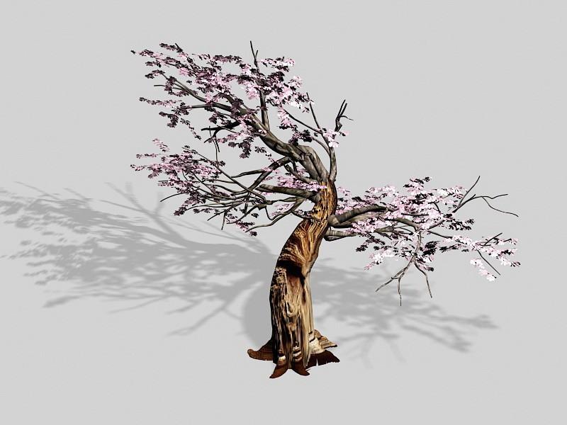Flowering Plum Tree 3d rendering