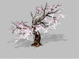 Flowering Plum Tree 3d model preview