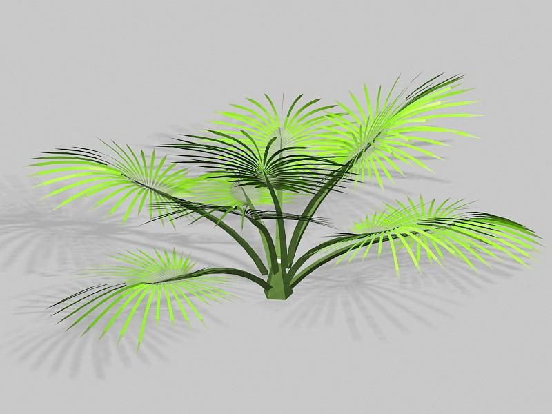 Palm Shrub 3d rendering