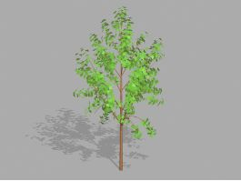 Small Tree Plant 3d preview