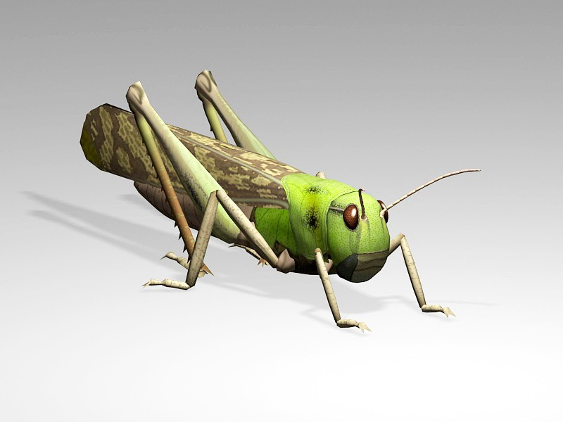 Grasshopper Cricket Insect 3d rendering
