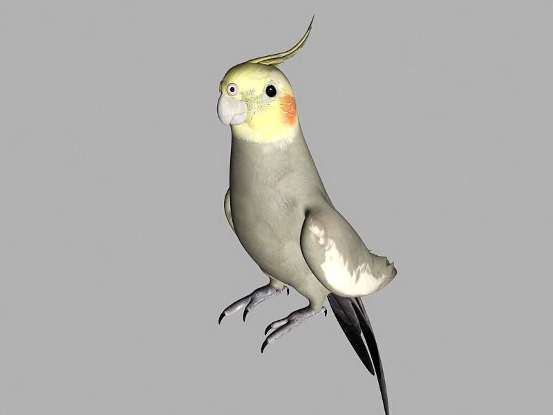 Cockatiel Bird 3d rendering