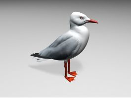 Pacific Seagull 3d preview