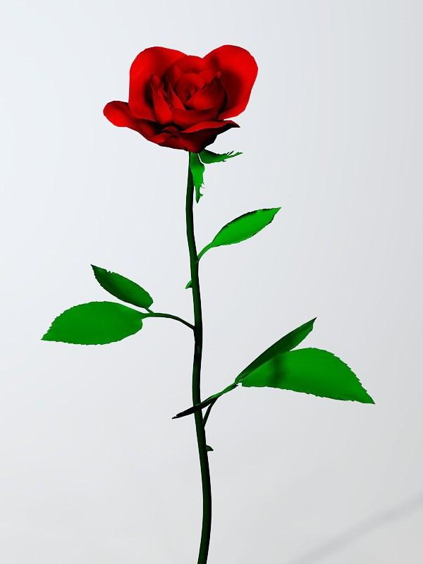 Red Rose Flower 3d rendering