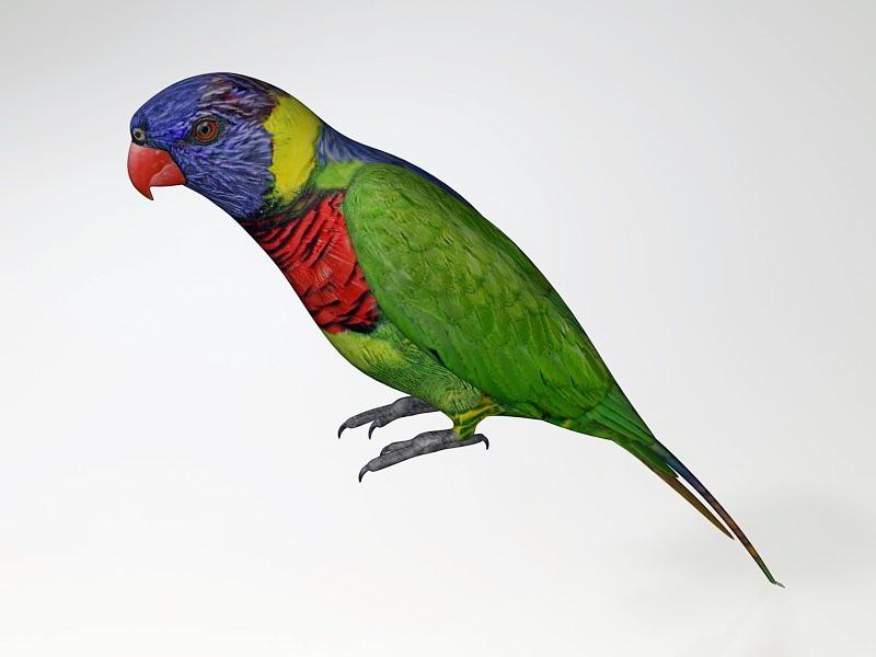 Australian Rainbow Lorikeet 3d rendering