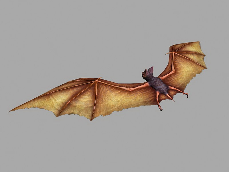 Flying Bat 3d rendering