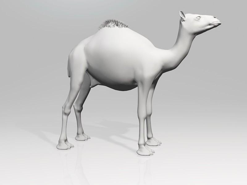 Arabic Camel 3d rendering