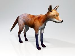 Red Fox Animal Rigged 3d preview