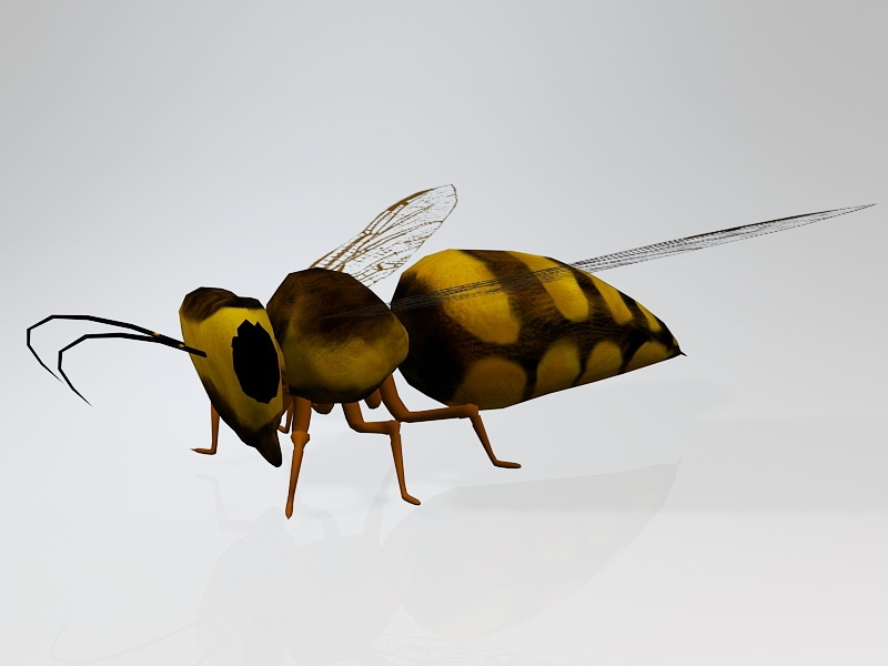 Wasp Bee Insect 3d rendering