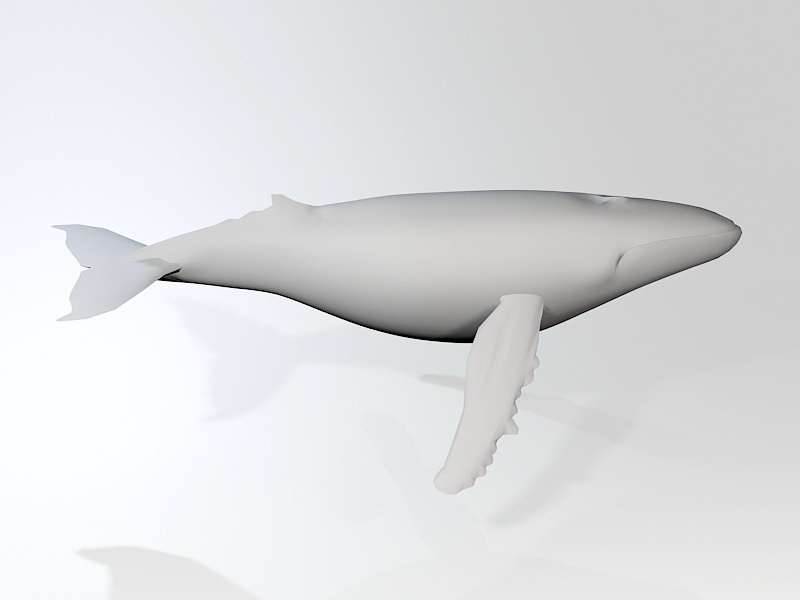 White Whale 3d rendering