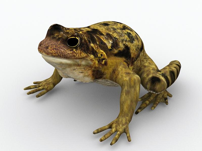 Common Garden Toad 3d rendering