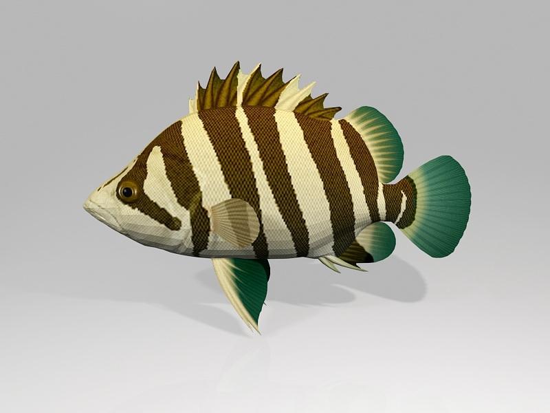 Siamese Tigerfish 3d rendering