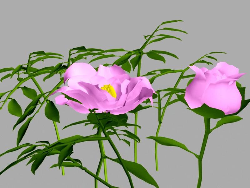 Peony Flower 3d rendering