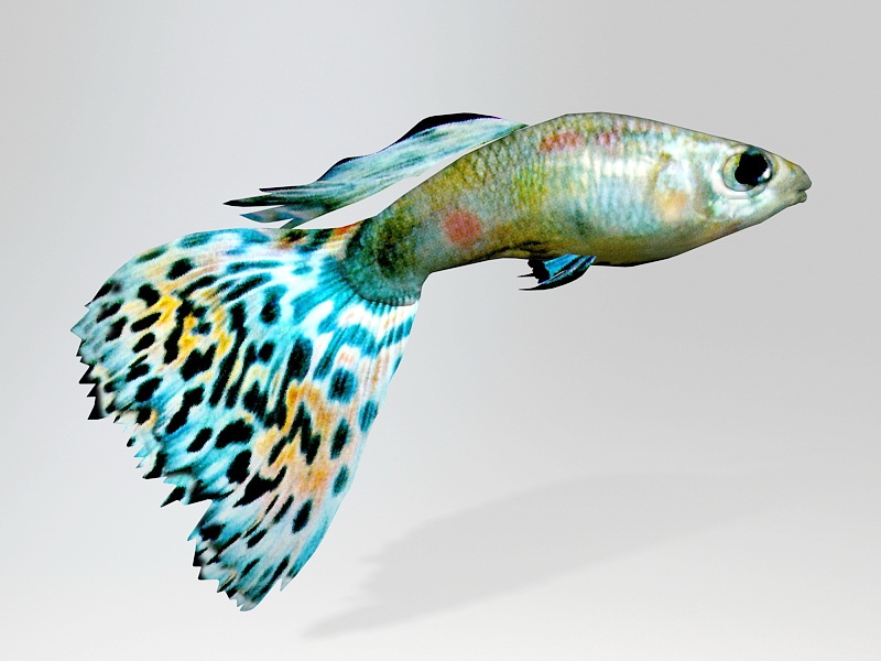 Rainbow Guppy Fish 3d rendering