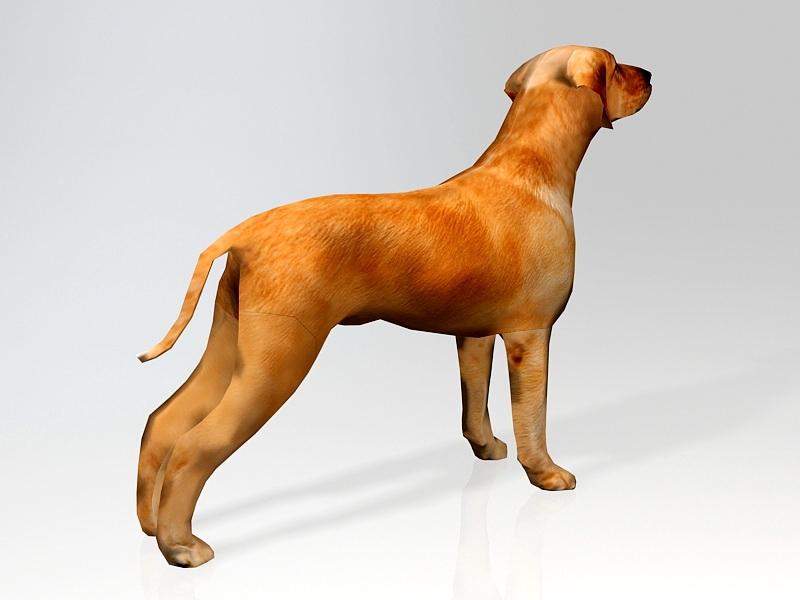 Ridgeback Puppy 3d rendering