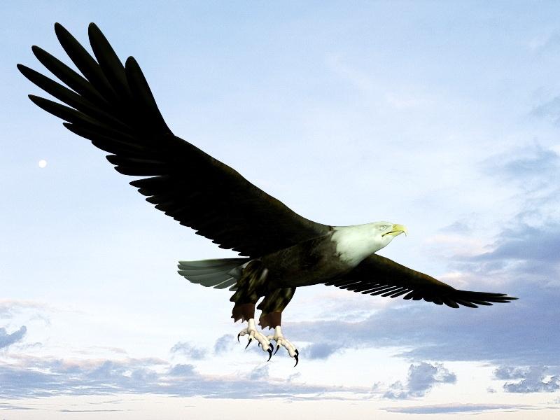 Bald Eagle Flying 3d rendering