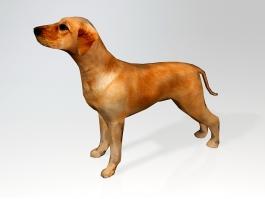 Ridgeback Puppy 3d preview