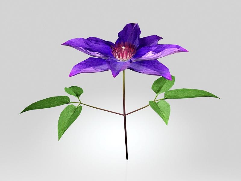 Clematis Flower 3d rendering