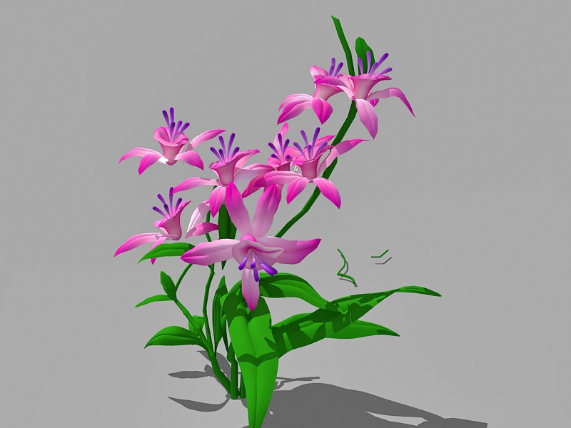 Pink Lily Flowers 3d rendering