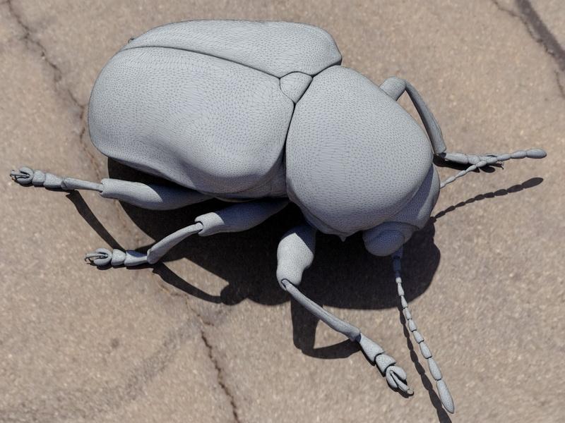 Water Scavenger Beetle 3d rendering