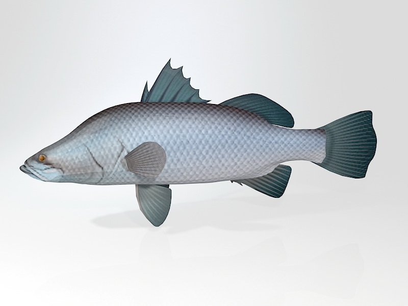 Barramundi Asian Sea Bass Fish 3d rendering