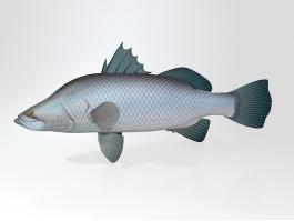 Barramundi Asian Sea Bass Fish 3d preview