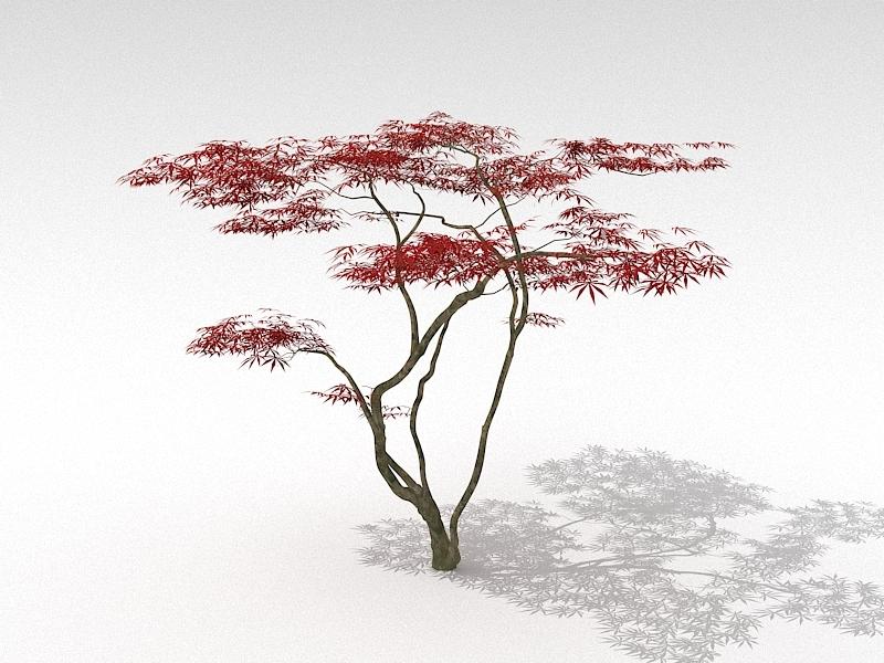 Japanese Red Maple Tree 3d rendering