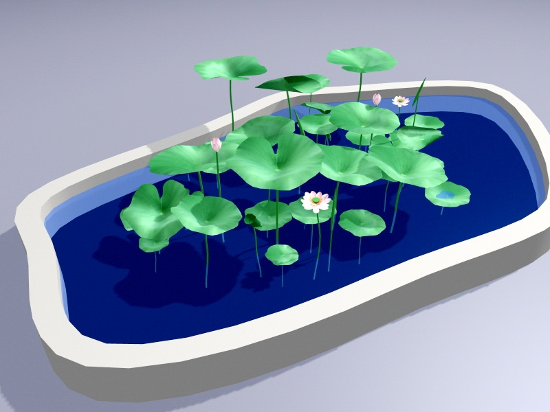 Small Lotus Pond 3d rendering