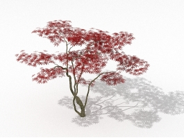 Japanese Red Maple Tree 3d preview