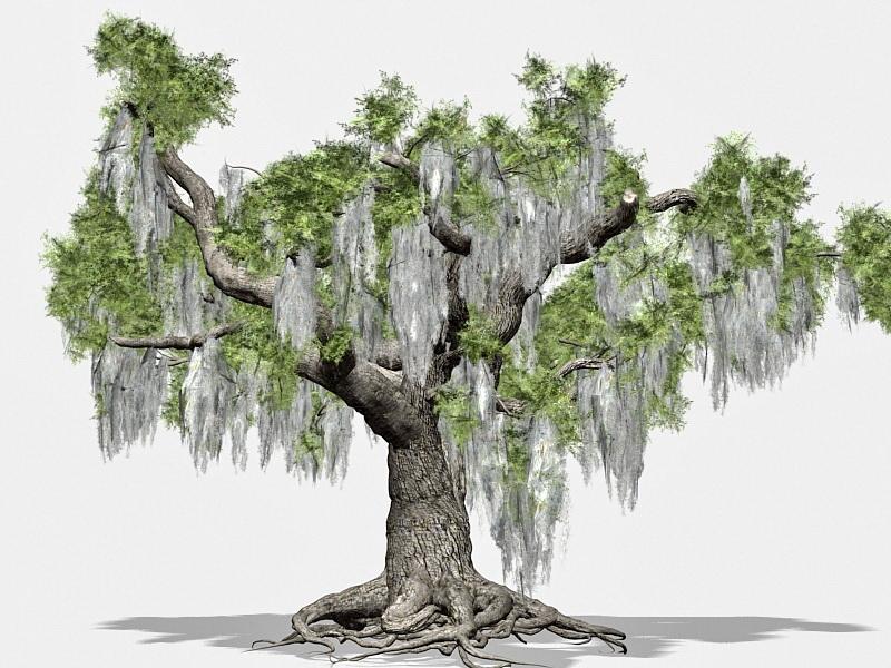 Beautiful Old Tree 3d rendering