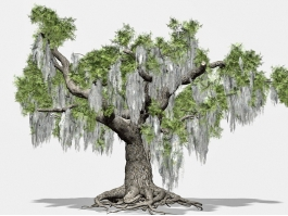 Beautiful Old Tree 3d model preview
