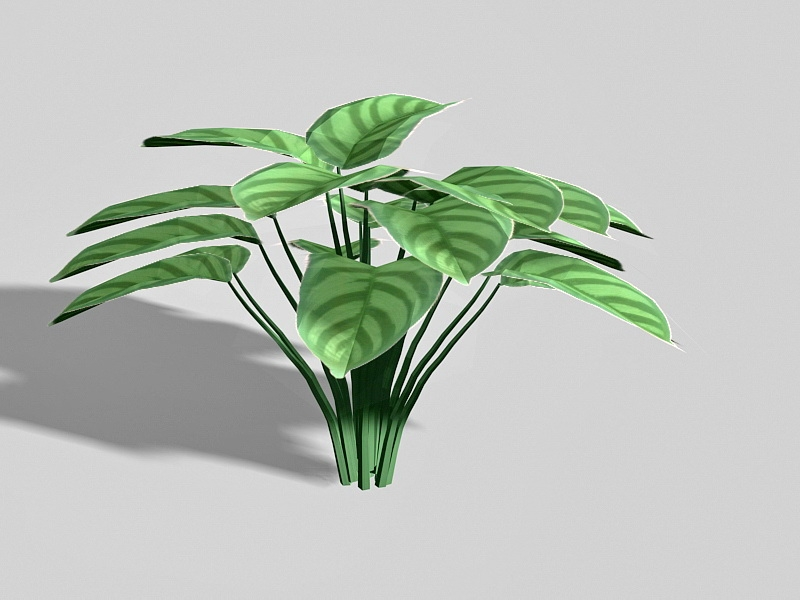Calathea Zebrina Plant 3d rendering