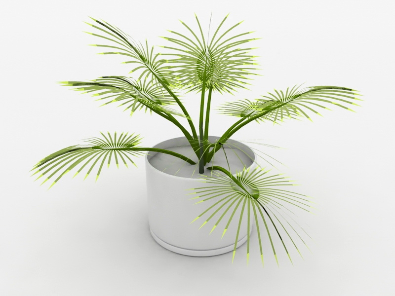 Palm Potted Plant 3d rendering
