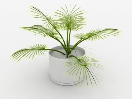 Palm Potted Plant 3d preview