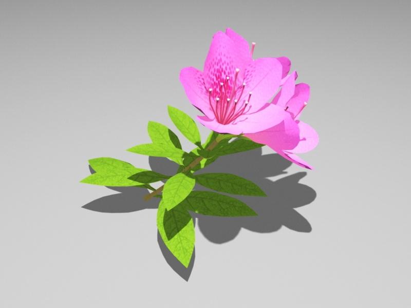 Pink Azalea Flower 3d rendering