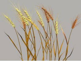 Nature Wheat 3d preview
