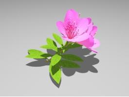 Pink Azalea Flower 3d preview