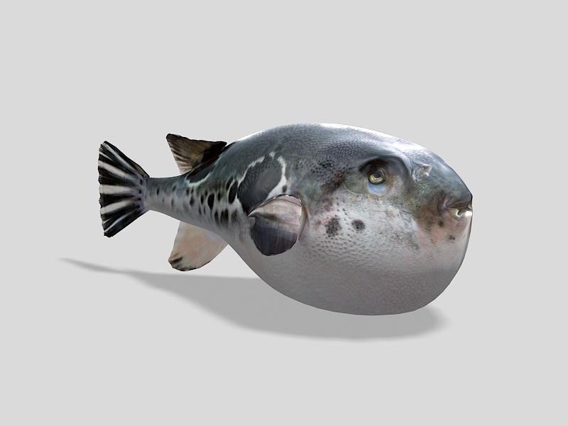 Big Puffer Fish 3d rendering