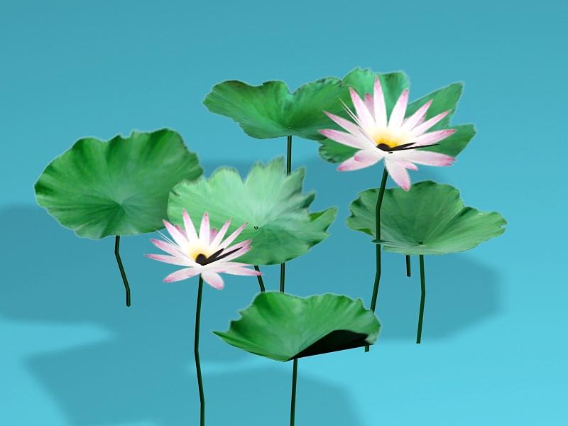 Egyptian Lotus Flowers 3d rendering