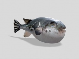 Big Puffer Fish 3d preview