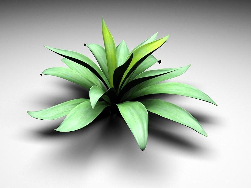 Agave Succulent Plant 3d rendering